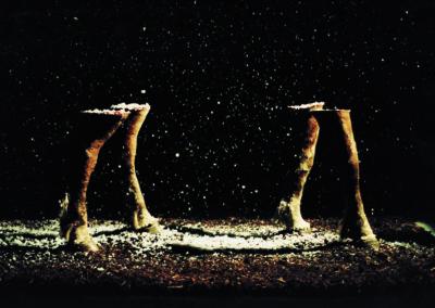 DELPHINE GIGOUX MARTIN « Don't believe in christmas » installation - 2002 - collection FRAC Midi-Pyrénées, Musée des Abattoirs, Toulouse | taxidermie, neige artificielle, terre et copeaux, lumière