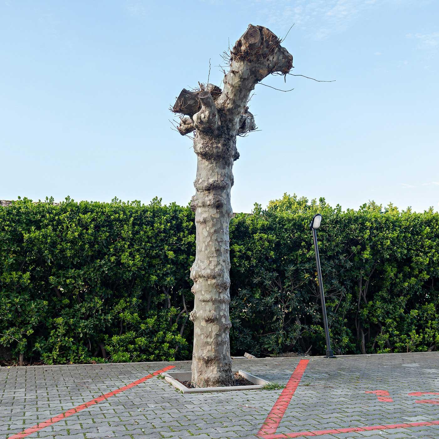 ©Pascal Servera - Suite arboricole #32