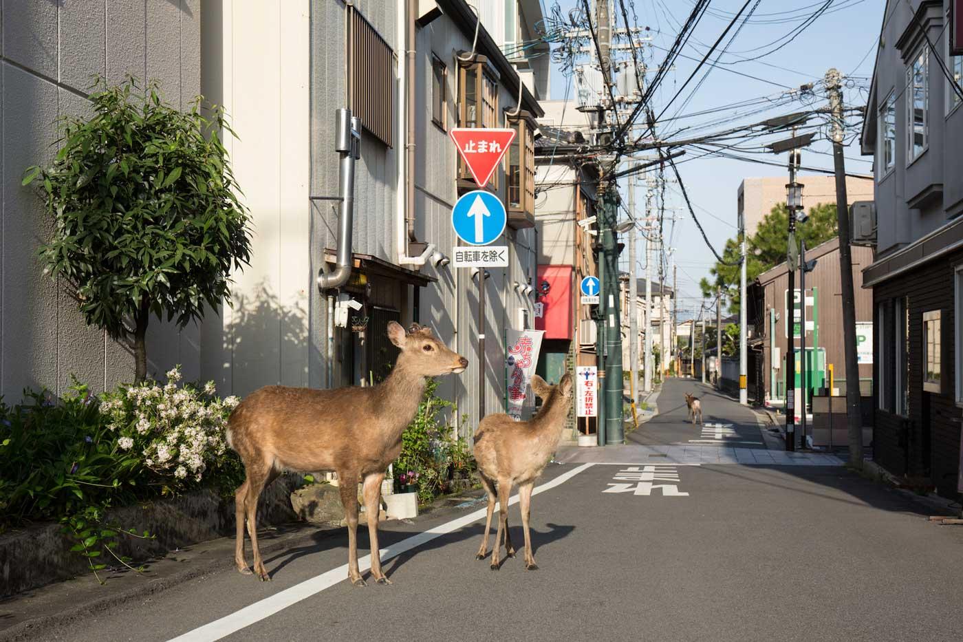 © Yoko Ishii